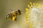 Защитаваме растенията и убиваме пчелите