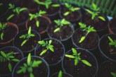 Променя се и Законът за посевния и посадъчния материал