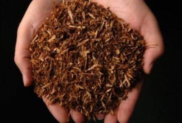 Разрешенията за изкупуване на суров тютюн от безсрочни ще станат със срок от четири години