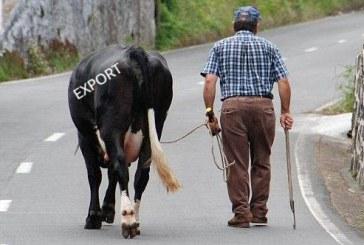 Животновъдите виждат надежда в износ на изток