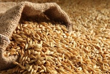 Над 250 000 тона е производството на пшеница в област Варна при 96 % реколтирани площи