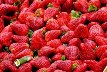 Добри изкупни цени за ягодите очакват в Търговищко