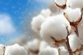 Започва приемът по de minimis за памукопроизводители