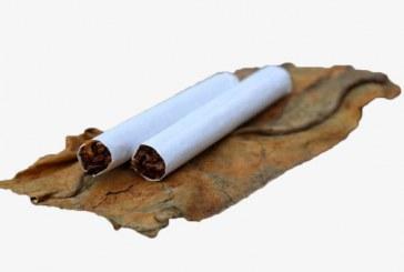 С 29,8 % повече е ориенталският тютюн тази година