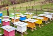 Крадци задигат кошери с пчелни семейства