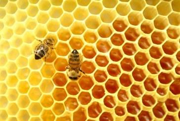 Пчелните семейства в кюстендилско трябва да бъдат подхранвани през целия зимен сезон