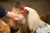 За или против добавките при храненето на животните