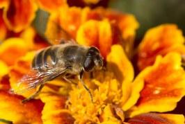 Приключиха първите класирания по Националната програма по пчеларство  2017-2019 г.