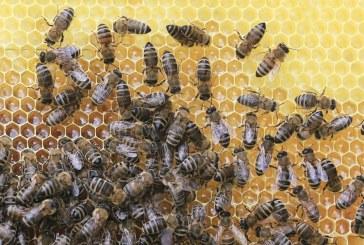 Пчеларството в България през 2016 година