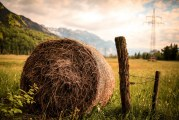 3 080 земеделски стопани са получили директни плащания в Смолянско