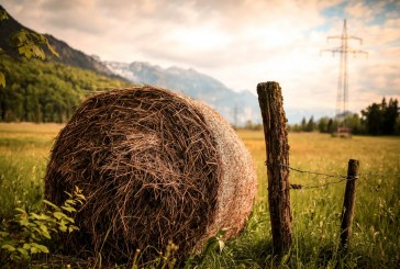 Накъде ще тръгне британската селскостопанска политика след Брекзит