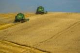 В Добричко прибраха до 625 кг пшеница от декар