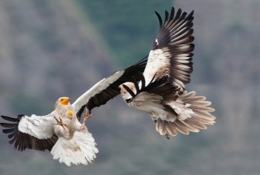 Прелетните птици вече пристигат у нас