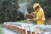 Международен проект ще стимулира пчеларския сектор в Черноморския регион