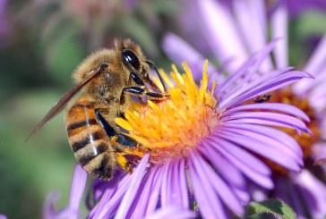 Къде е подкрепата за пчеларите в бъдещата ОСП