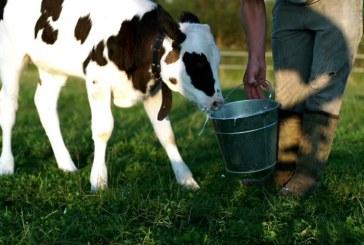 Животновъдите получиха 11 млн. лева извънредна помощ