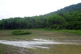ДФЗ изплати 1,8 млн. лева компенсации за пропаднали площи през 2016 година