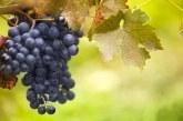 Предстои прием по новата мярка за инвестиции от лозаро-винарската програма