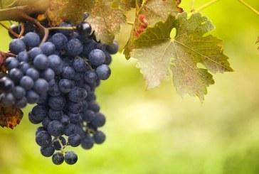 Новата лозаро-винарска програма стартира от 28 януари 2019 г.