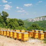 Представят новата пчеларска програма в София в неделя