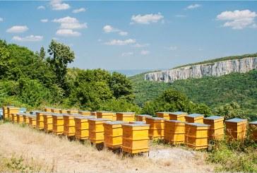 Пчелин с над 100 кошера изгоря в пожар