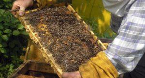 пчелна рамка
