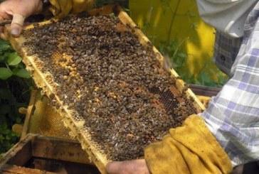 На 8 май ще бъде свикан Консултативният съвет по пчеларство