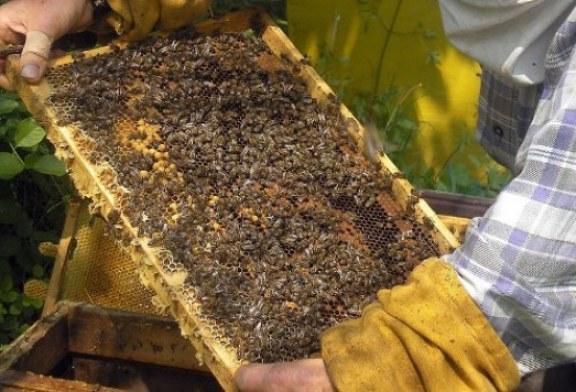 Все още няма точна информация за смъртността при пчелите