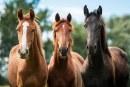 Остават броени дни до Националното изложение по животновъдство