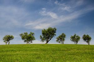 ливада, пасище и дървета