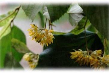 МОСВ призовава да пазим природата от инвазивни чужди видове дръвчета и храсти