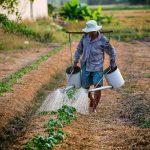 """Плащането на биологичните производители и кандидатстването по мярка 11 """"Биологично земеделие"""" ще става по данни от новия биорегистър"""