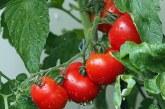 Разпределят се 4 млн. лв. в подкрепа на производителите на плодове и зеленчуци