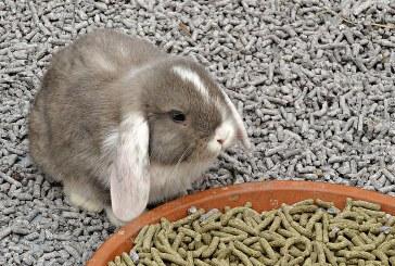 Технология за хранене на зайци