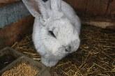 Състав на комбиниран фураж за зайци