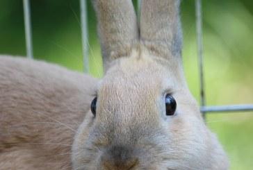 Отглеждане на зайци в клетки