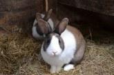 Отглеждане на зайци – основни изисквания