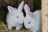 Зайцевъдството като източник на доходи