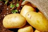 Отчетен е ръст от 32% на площите със зеленчукови култури в област София-град в периода 2014-2019 г.
