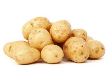 Технология за производство на ранни картофи