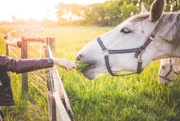 Ефективно хранене на работните коне