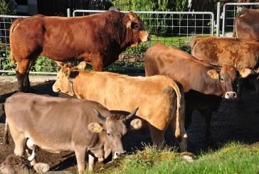 За 4 години заявените за подпомагане говеда в Смолян са нараснали с 40%