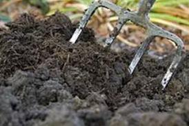 Рационално използване на оборския тор в зеленчуковата градина