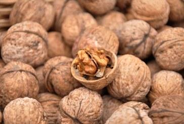 Крадци обраха 260 кг общински орехи край Каварна