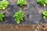 Използване на полиетиленово фолио като мулч при полско производство на зеленчуци