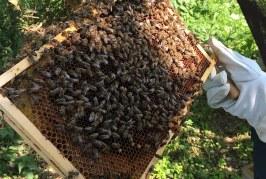 Как се става пчелар?