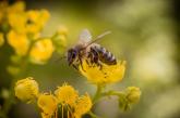 С 65 % е увеличен броят на пчелните семейства в Област Перник за последните 5 години
