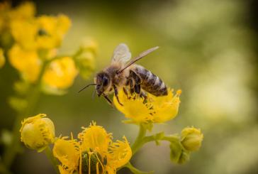 Болестите и неприятелите на пчелите