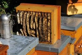 Грижи за пчелното семейство през различните сезони