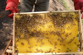 Настроени ли са вече пчеларите един срещу друг